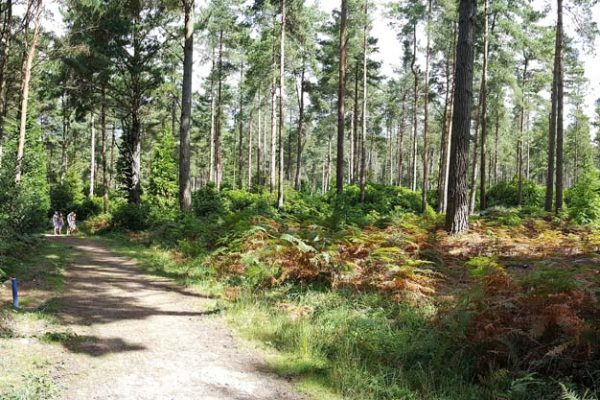 Burnbake Forest Lodges And Campsite Gallery 33