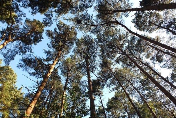 Burnbake Forest