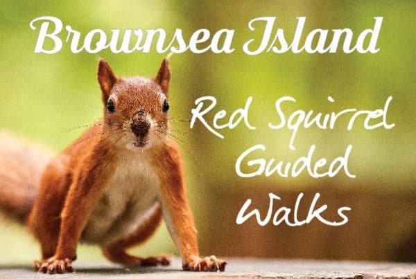 Brownsea Island is the perfect place to catch sight of one of the now less common native red squirrels