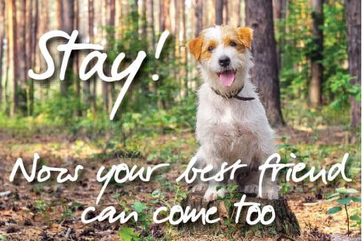 Please call 01929 480570 or email info@burnbake.com to check availability of our two dog friendly lodges.