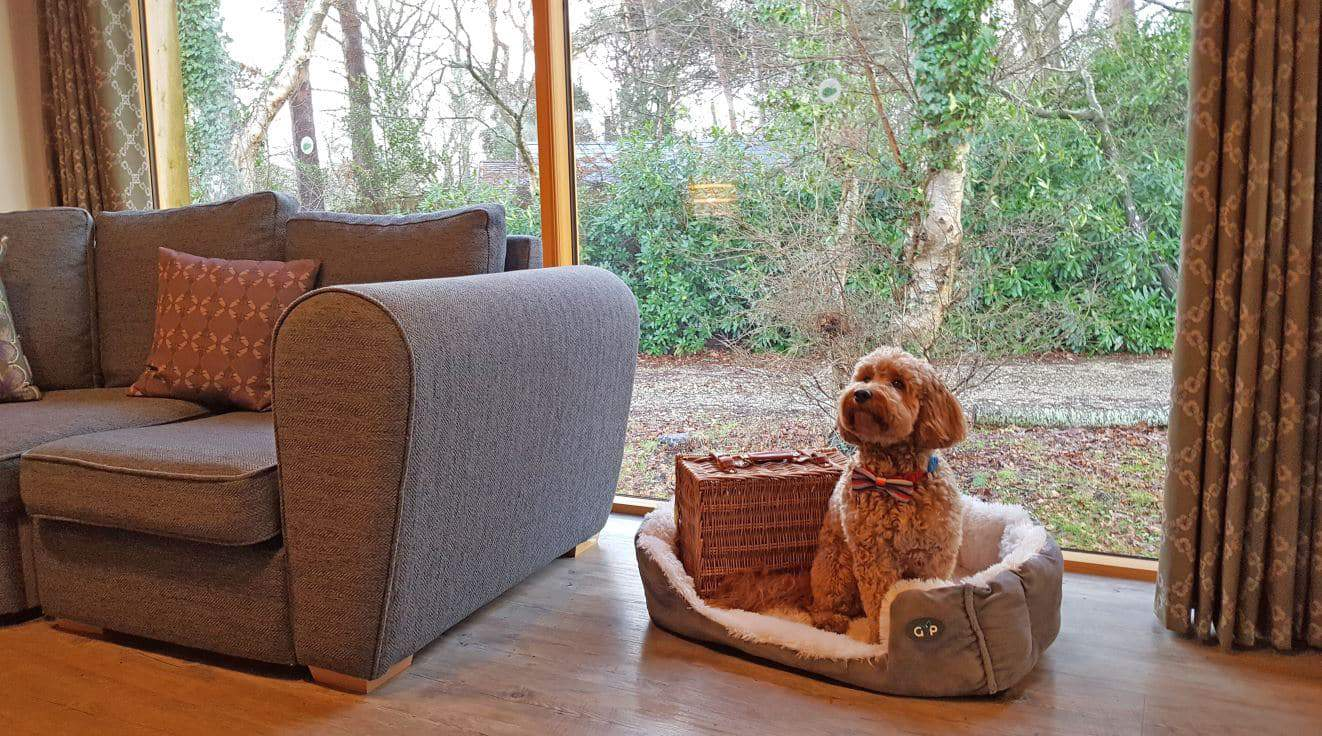 Two, two bedroom dog friendly lodges.