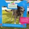 Dog Friendly Lodge Sponsored Walk At Burnbake Lodges Dorset Purbeck