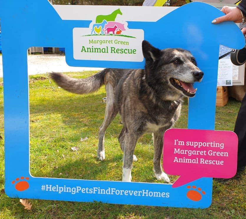 Dog Friendly Lodge Sponsored Walk At Burnbake Lodges Dorset Purbeck