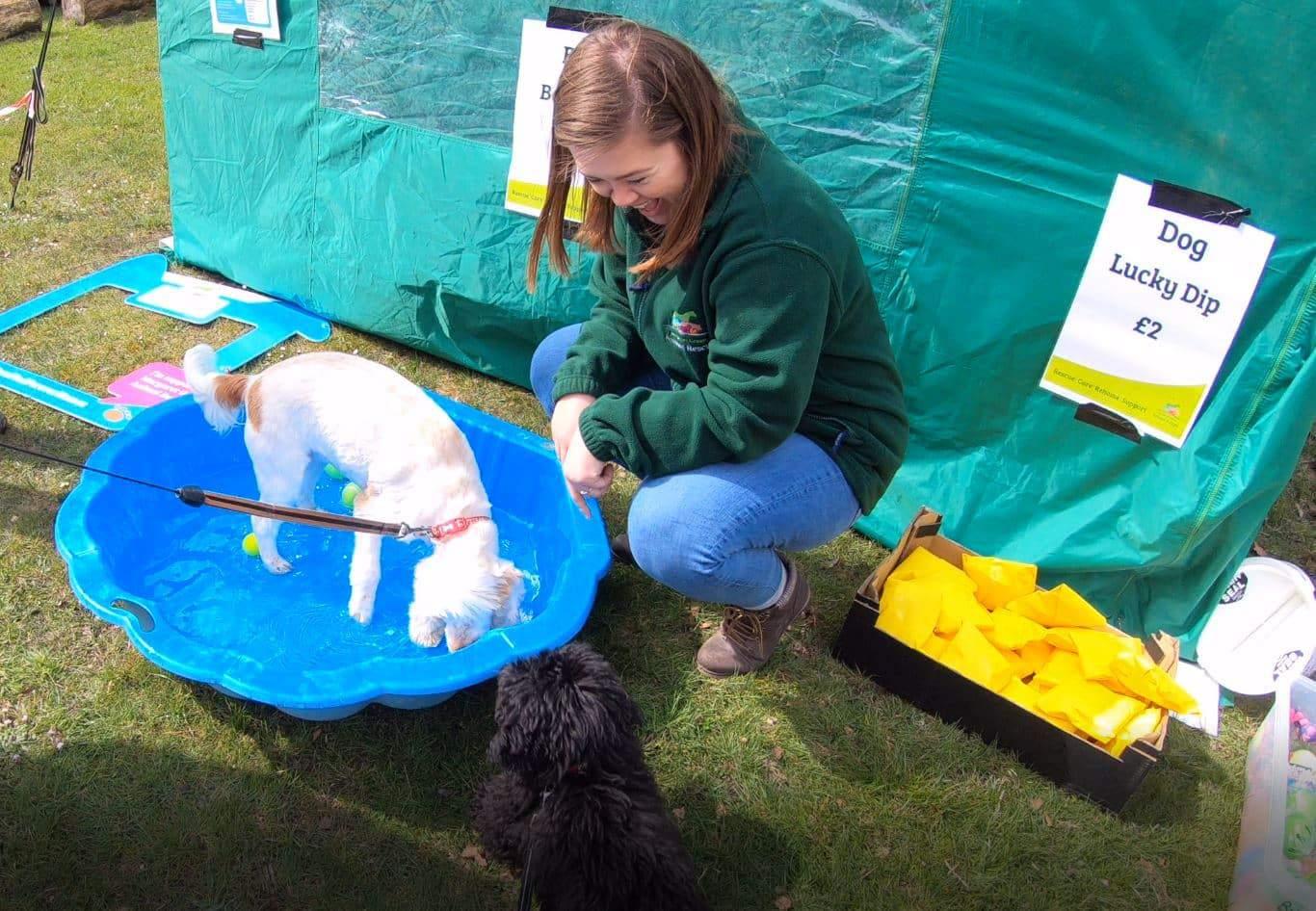 Dog Friendly Lodge Sponsored Walk At Burnbake Lodges Margaret Green Dorset Purbeck