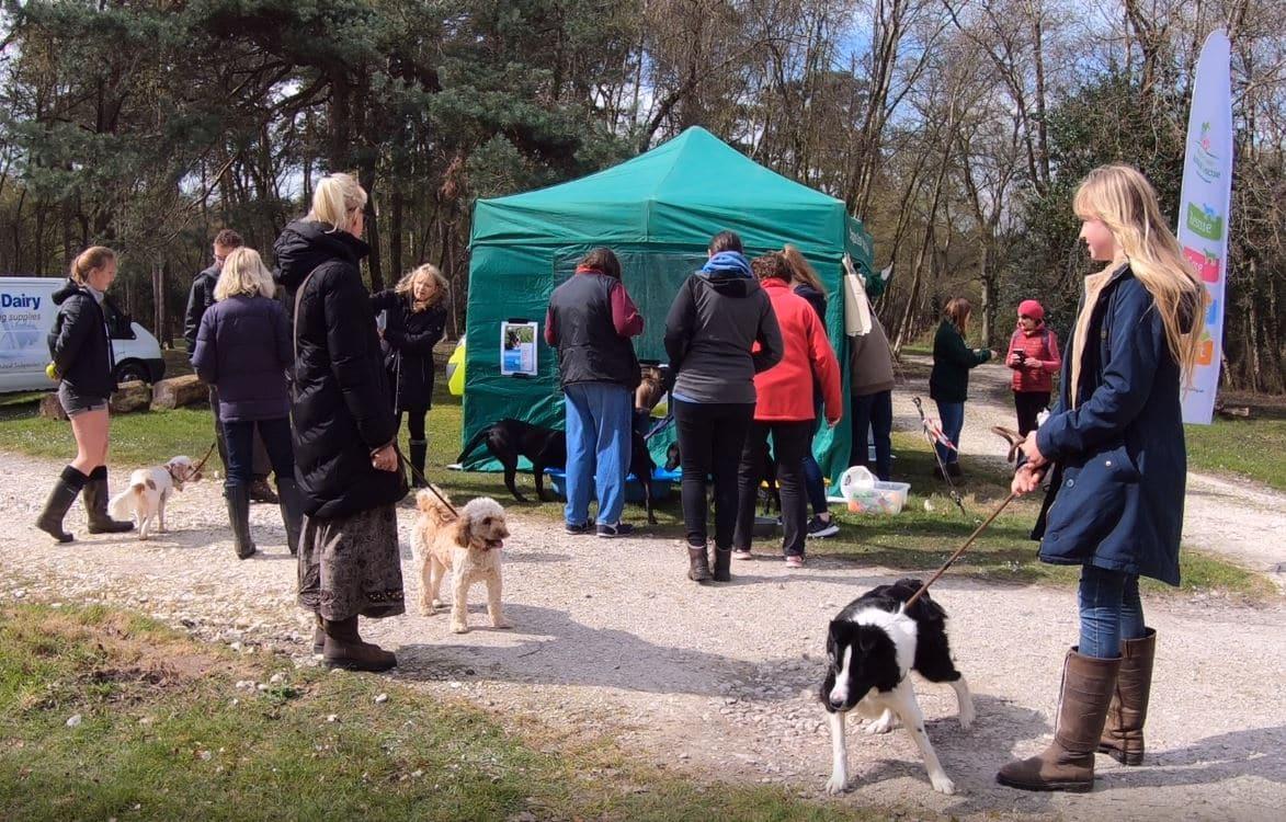 Dog Friendly Lodge Sponsored Walk At Burnbake Lodges Margaret Green Dorset Uk Purbeck