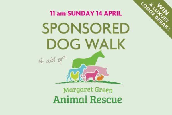 Sponsored Dog Walk At Burnbake Forest Lodges Dorset Studland Purbeck